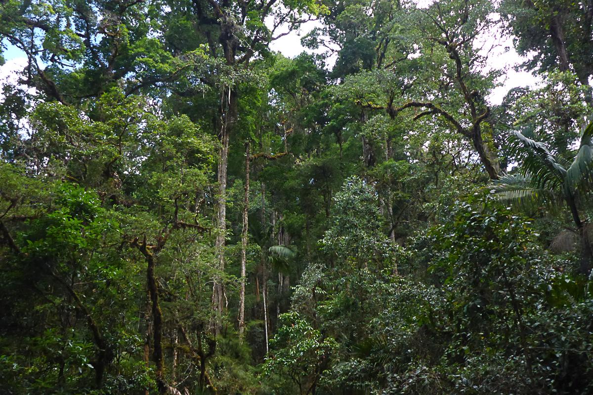 forest at Savegre.jpg