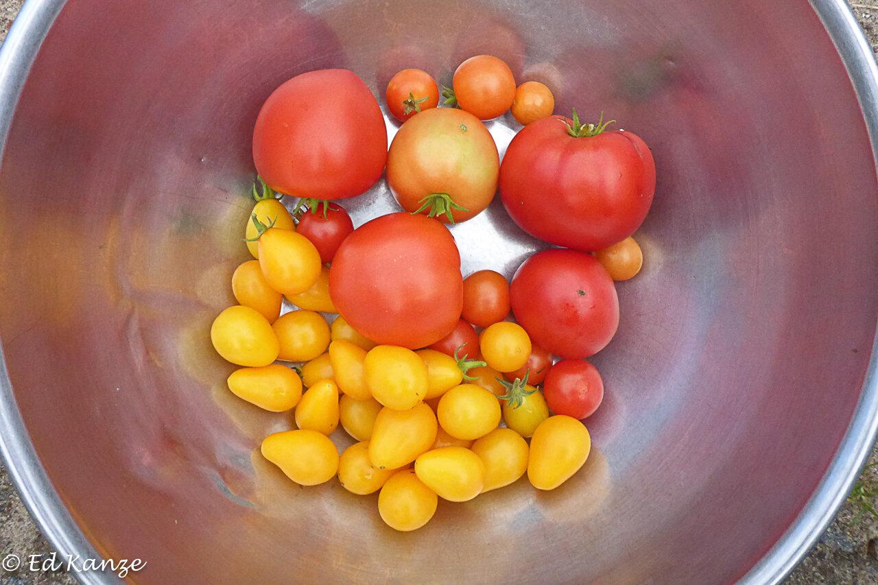 A few last tomatoes….