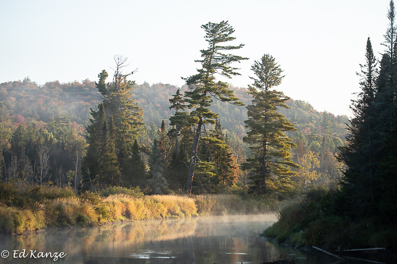 The Saranac River on a chilly fall morning—-the dot in the pine with a dead top is a bald eagle, the same one pictured below