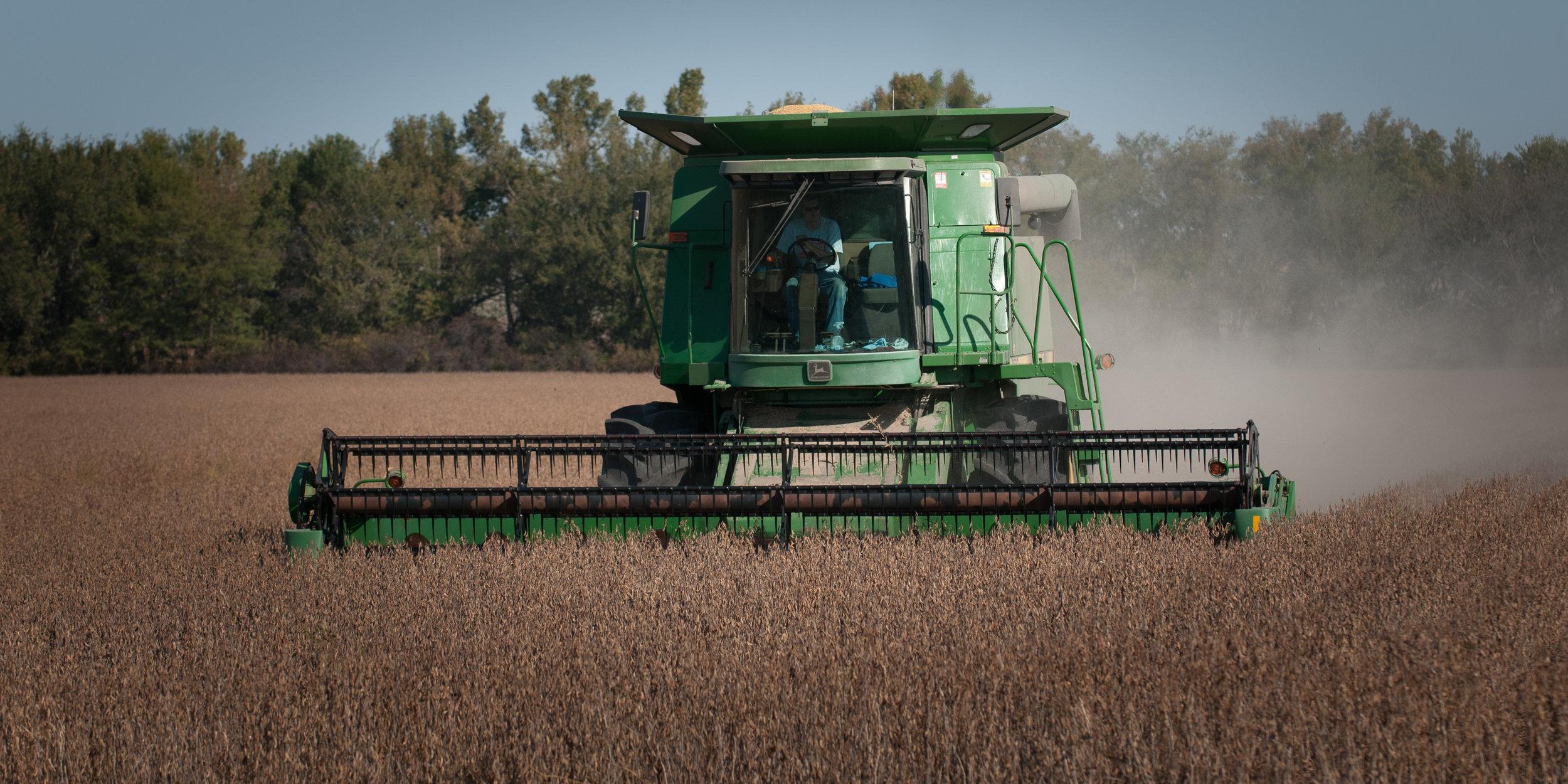 Crops 100610-067.JPG