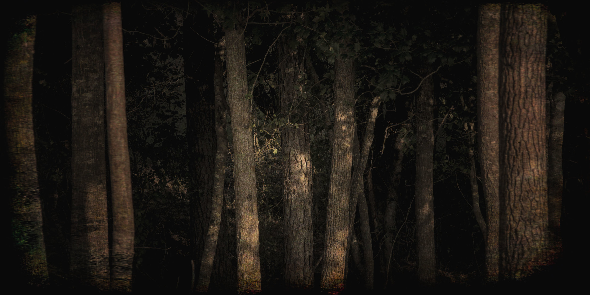 FSCR Trees 20180726 067 v3.jpg
