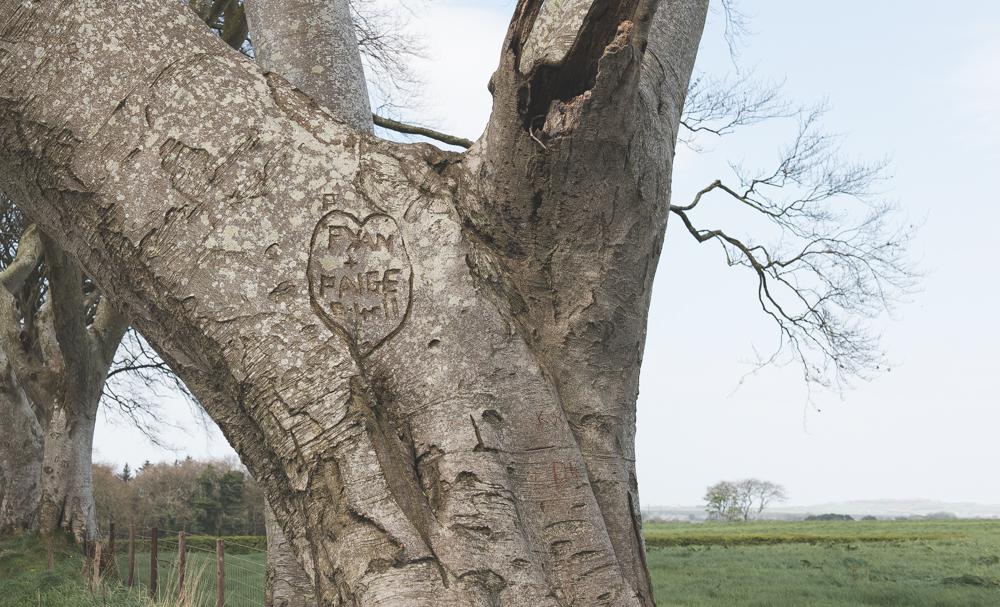 Some of the trees have carvings from visitors on them.