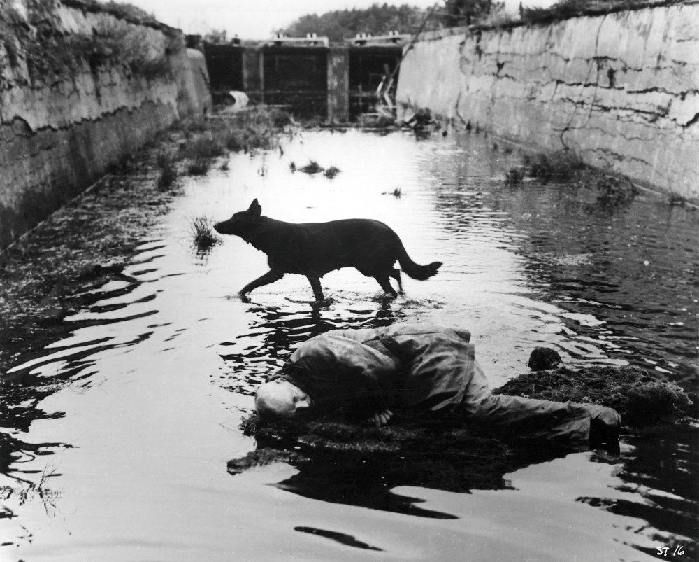 Andrei Tarkovsky,  Stalker  (still), 1979.