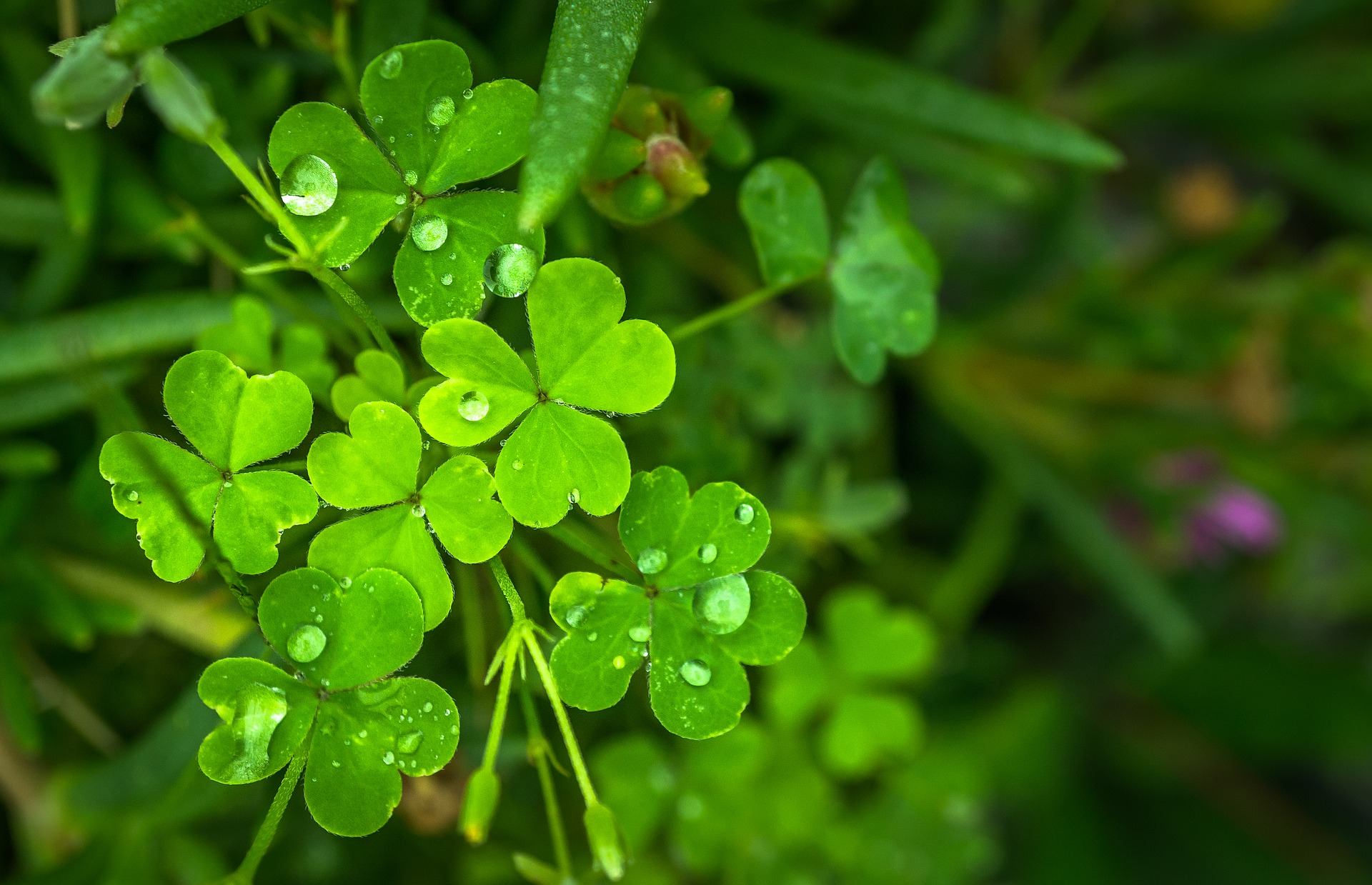 6 Things You Didn't  Know About St. Patrick - Gifts for Mystics