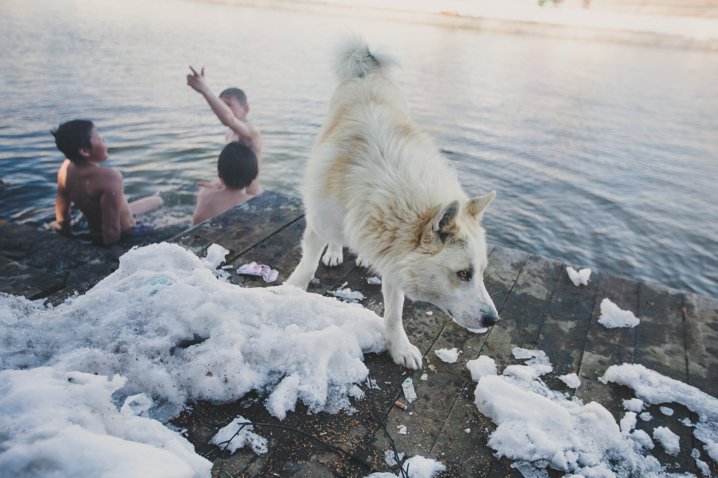 A dog waits near one of Kamchatka's many natural hot springs, while children play in the water.