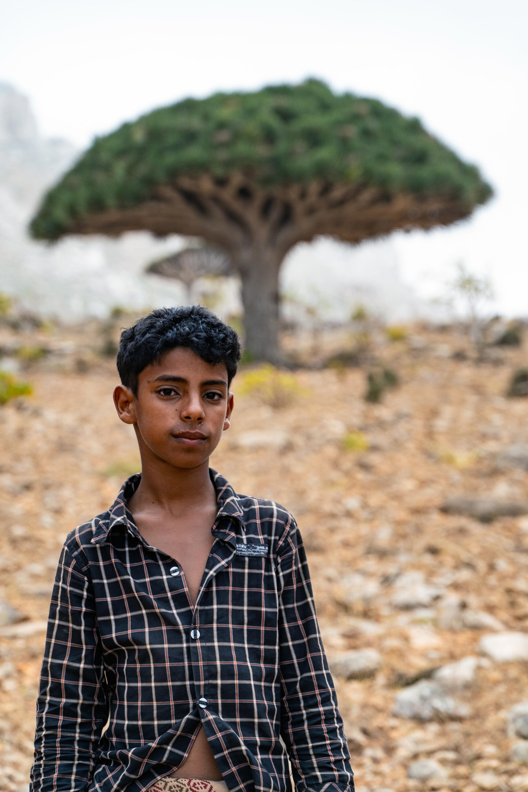 A young Socotri boy sells Dragons Blood Tree resin in Homhil. The resin is said to have medicinal qualities for women, and can be used as a cosmetic. It's bright red in colour, hence the name Dragons Blood.
