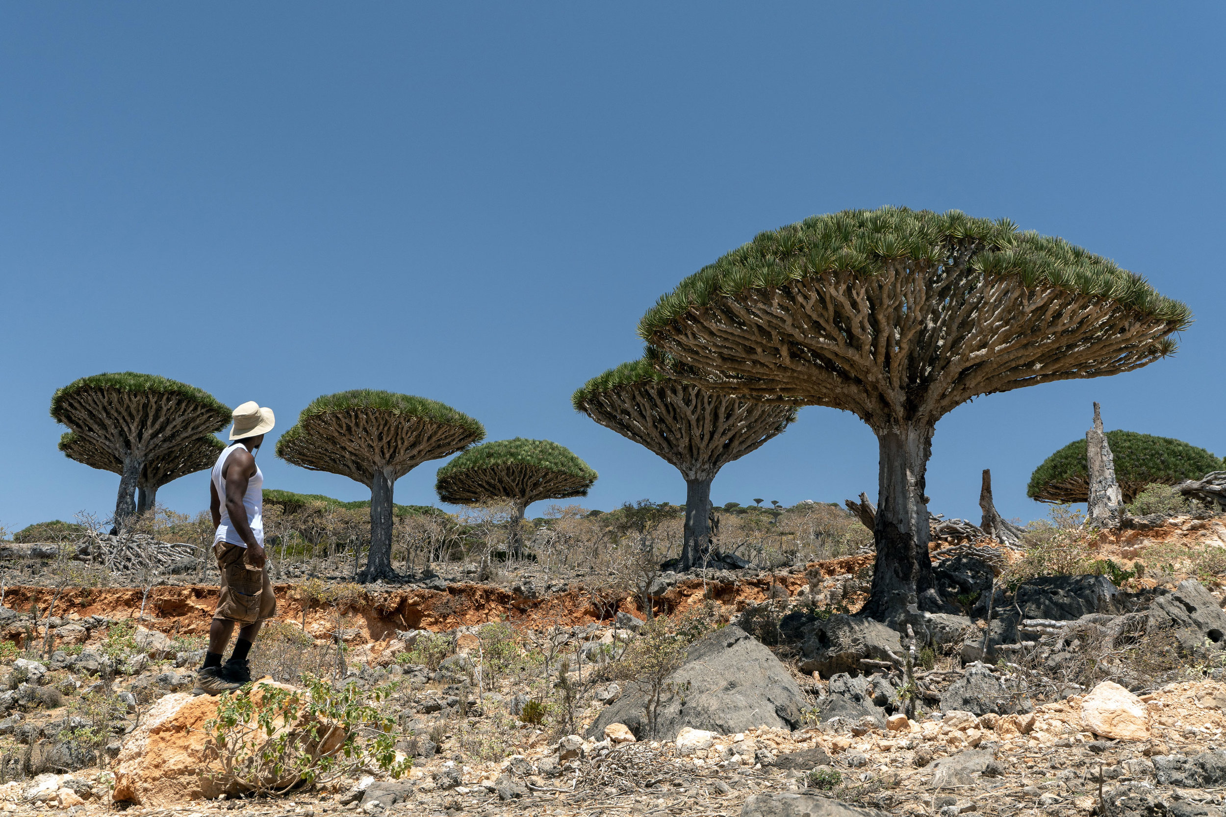 Hiking amongst the Dragon's Blood Trees in the Firhmin Forest, Socotra.