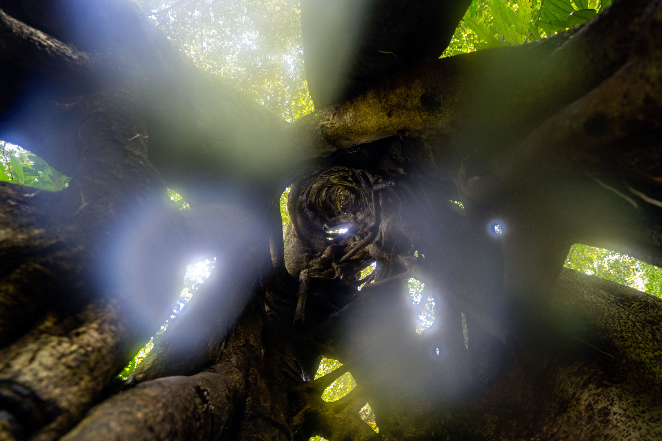 inside-a-rainforest-tree-sumatra-aceh-indonesia-trekking-jungle.jpg