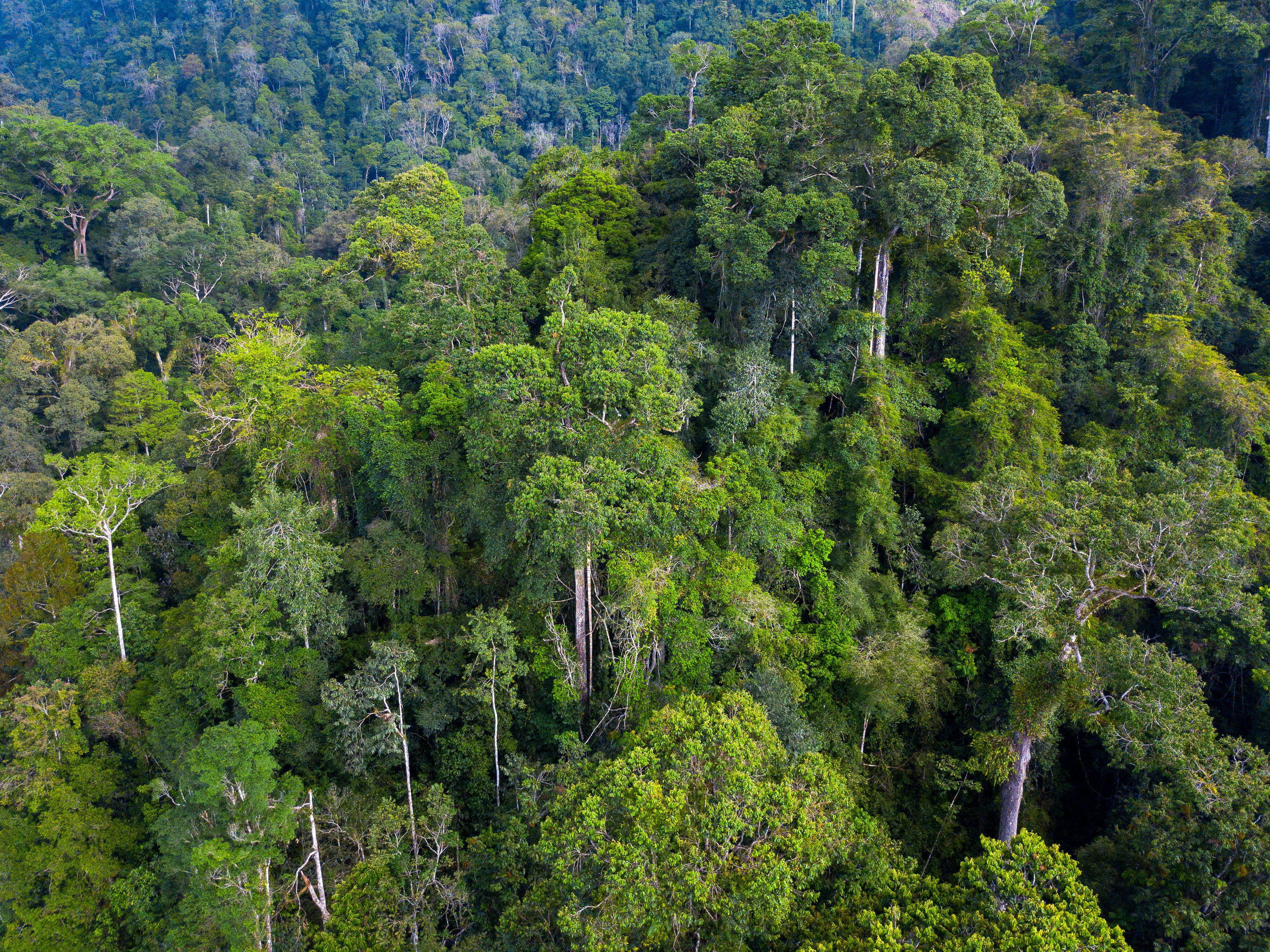 An aerial view of Gunung Leuser National Park in Aceh, Sumatra, Indonesia.