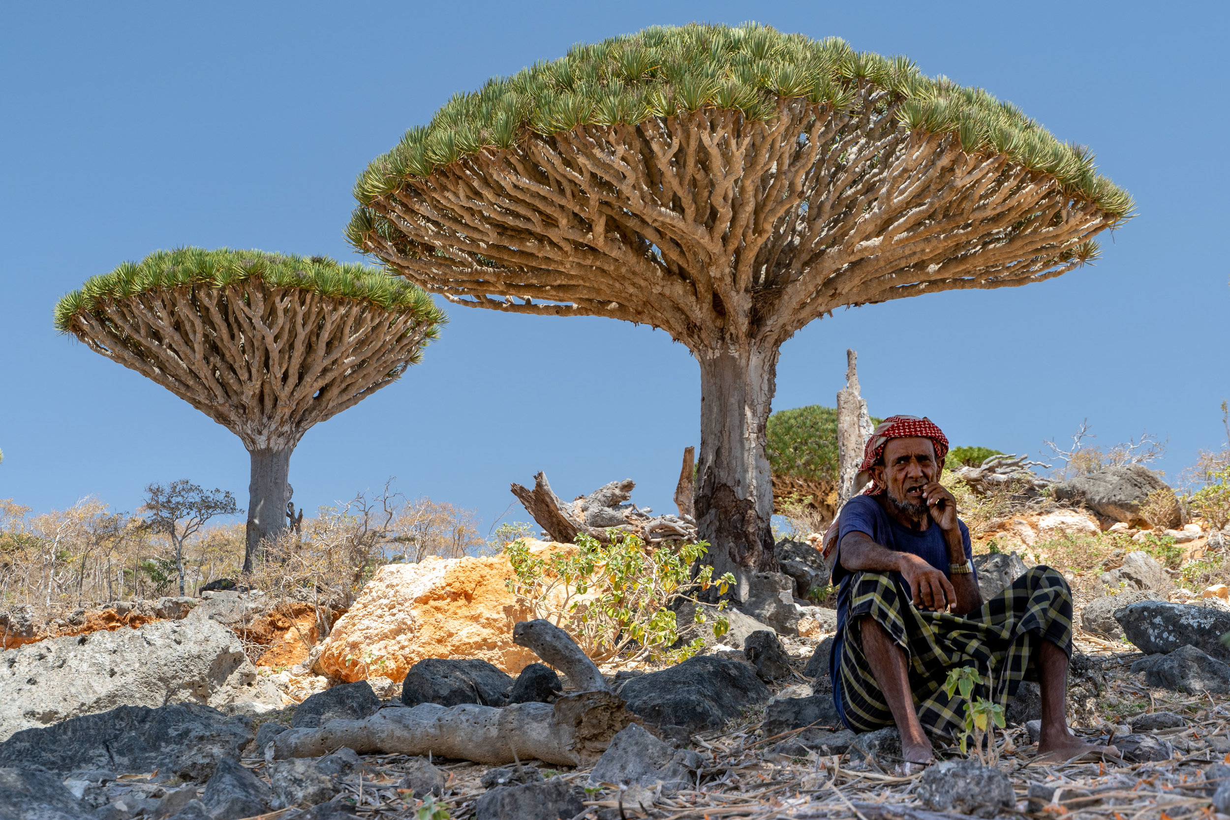 Socotri Bedouin man takes a rest in the Firhmin Forest