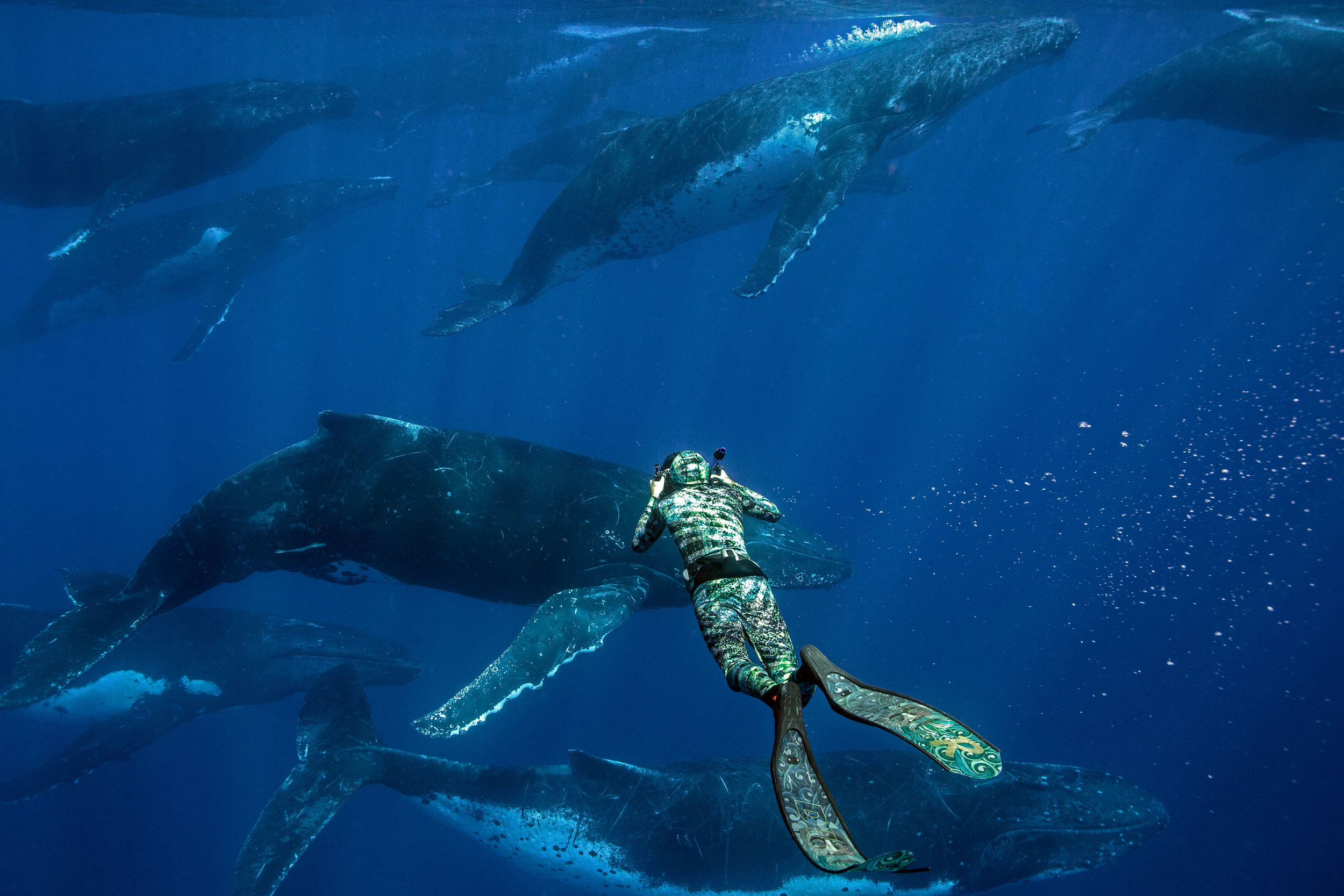 swim-with-whales-rurutu-french-polynesia-sustainable-eco-travel-inertia-network.jpg