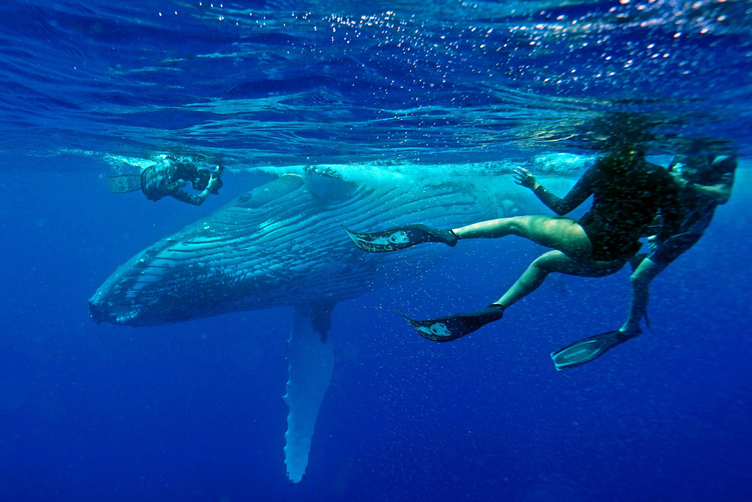 swim-with-whales-rurutu-polynesia.jpg