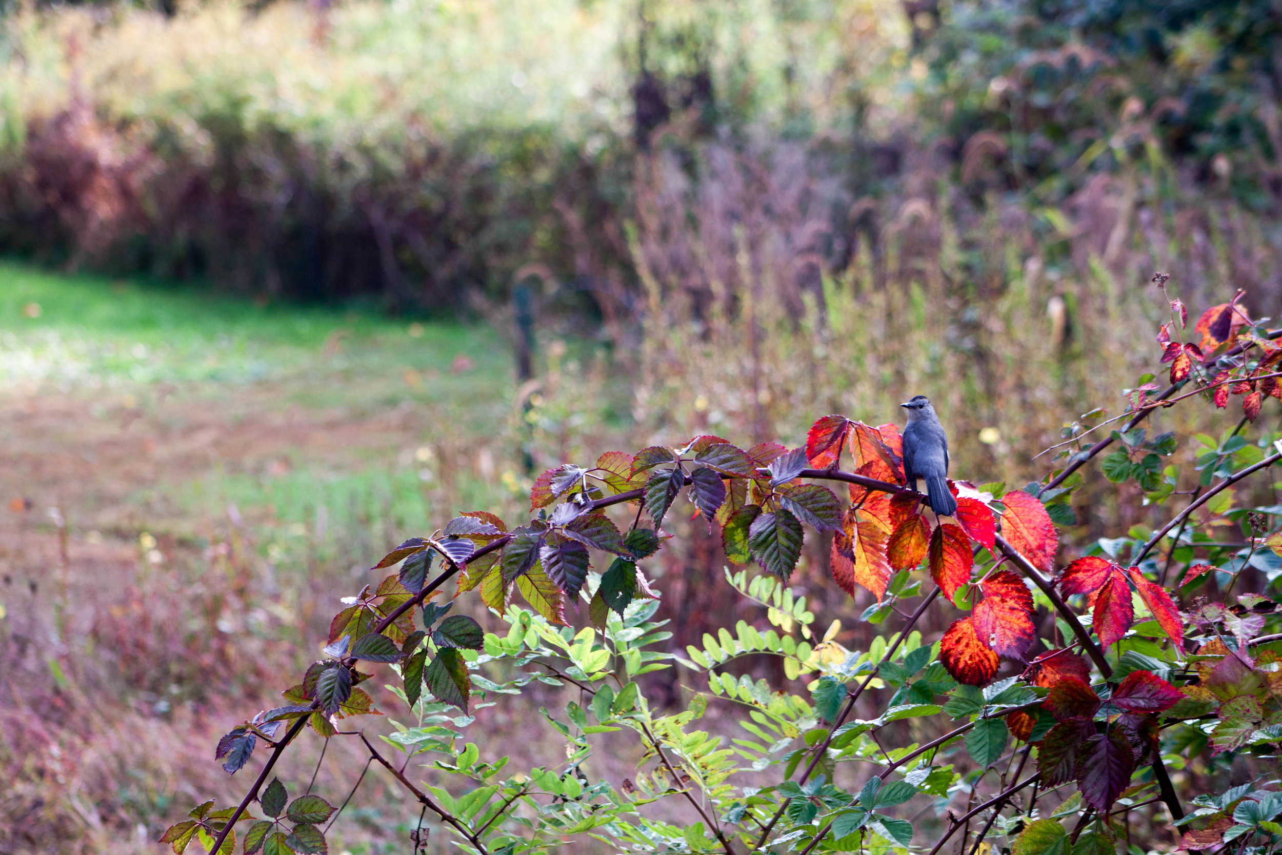 A bird perches on a branch in our backyard in Bradford, Rhode Island, 2013 or 2014.