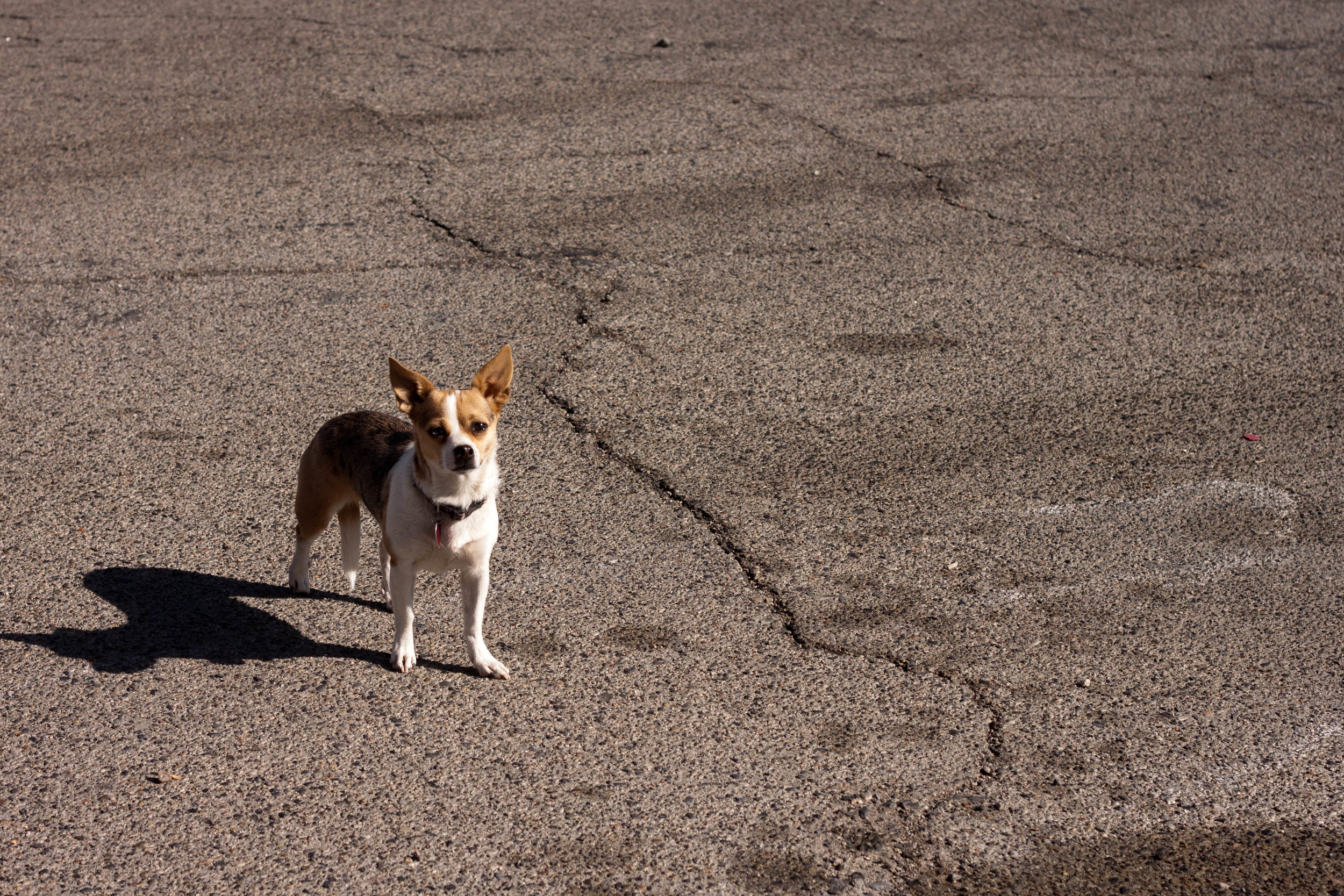 A dog checks out visitors to a gas station in  Searles Valley, California , in 2017.