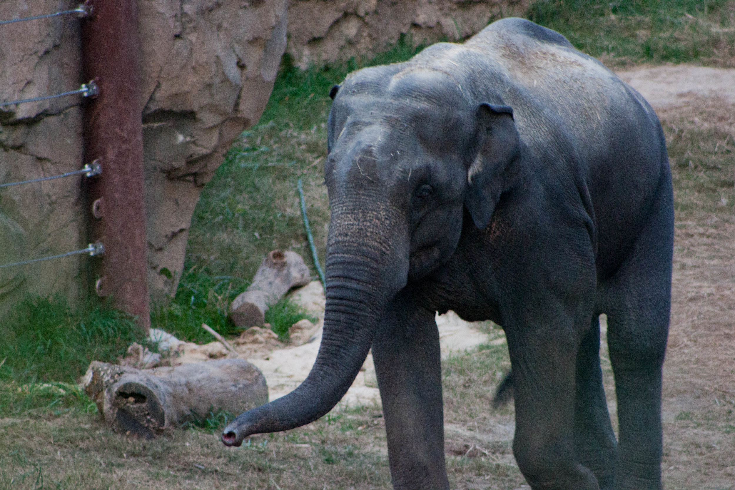 An elephant greets visitors to  the Smithsonian's National Zoo  in Washington, D.C., October 2012.