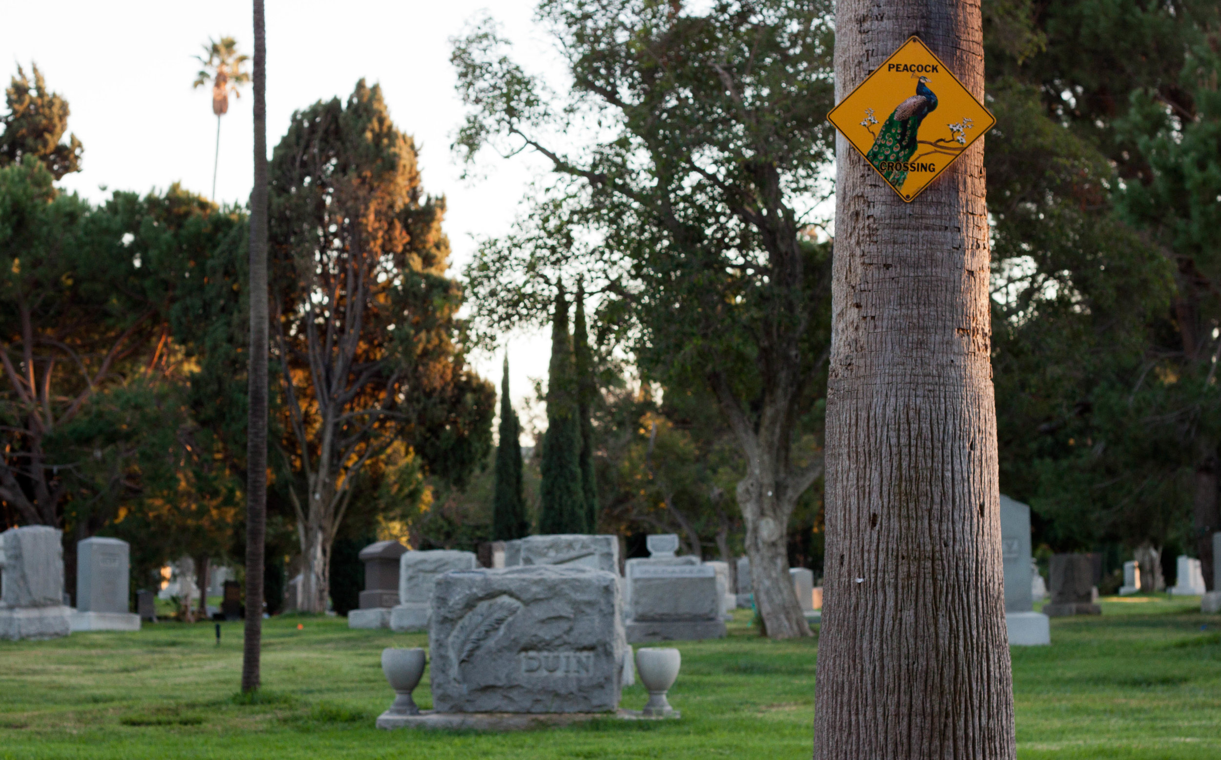 A sign marks a peacock crossing path at  Hollywood Forever Cemetery  in Los Angeles, 2017.