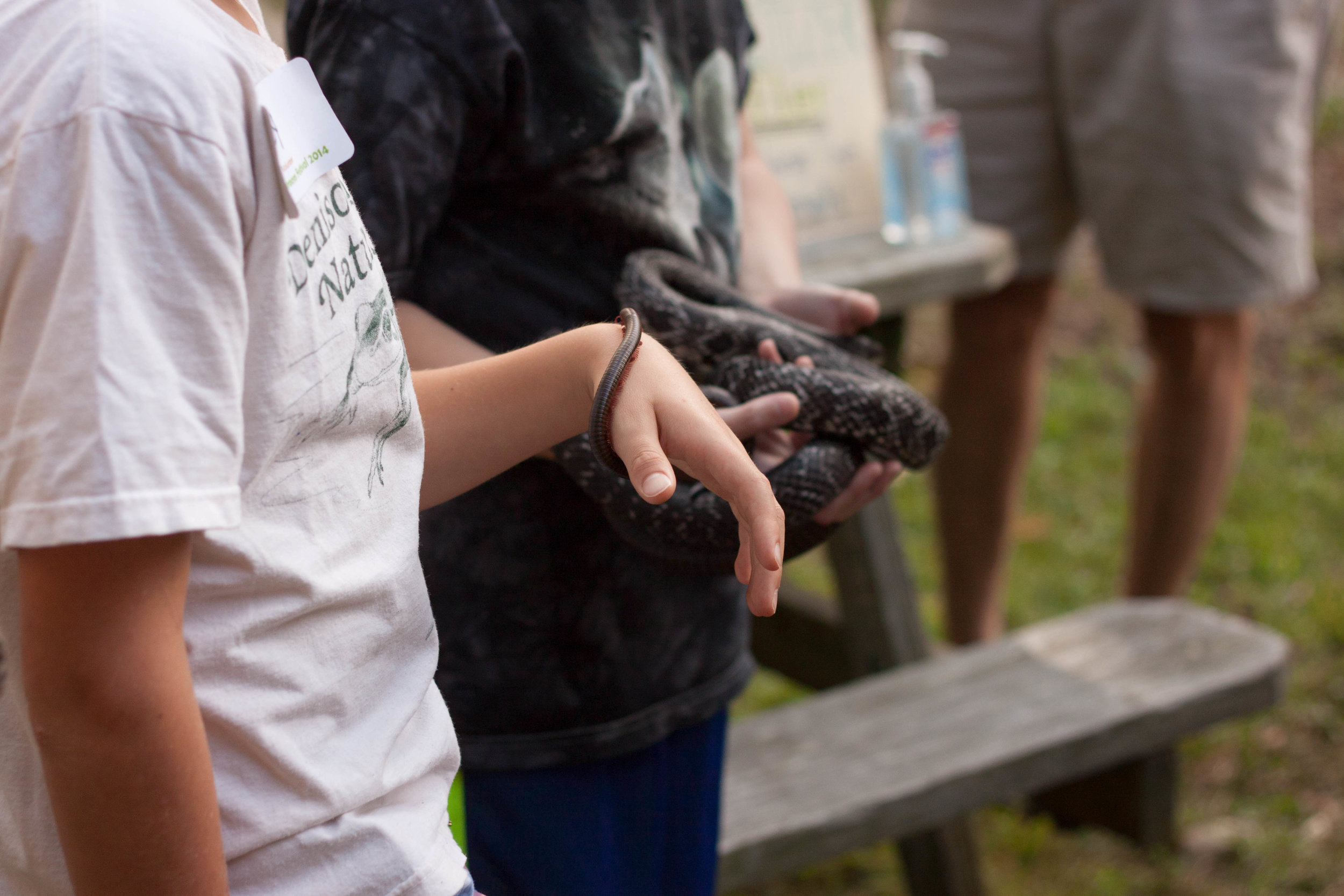 A boy lets a millipede crawl on his hand at the Denison Pequotsepos Nature Center in Mystic, Connecticut, in 2014. Read the article  here .