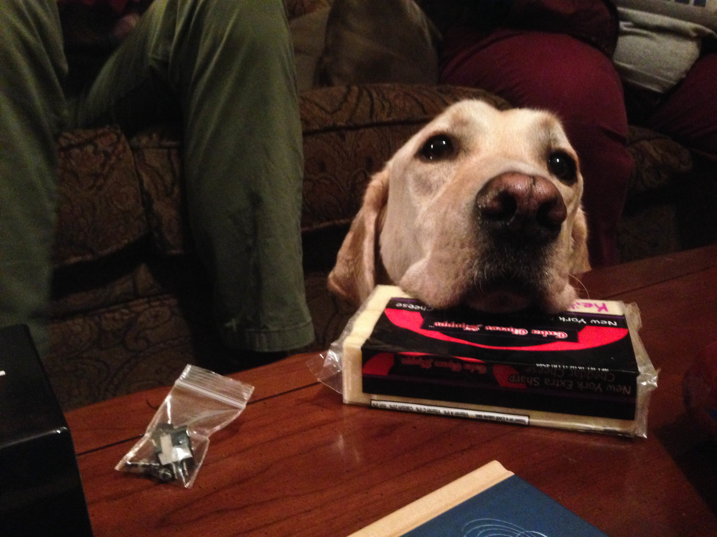 My cousin's dog, Otis, rests his head on a block of cheese. Arlington, Texas, December 2014.