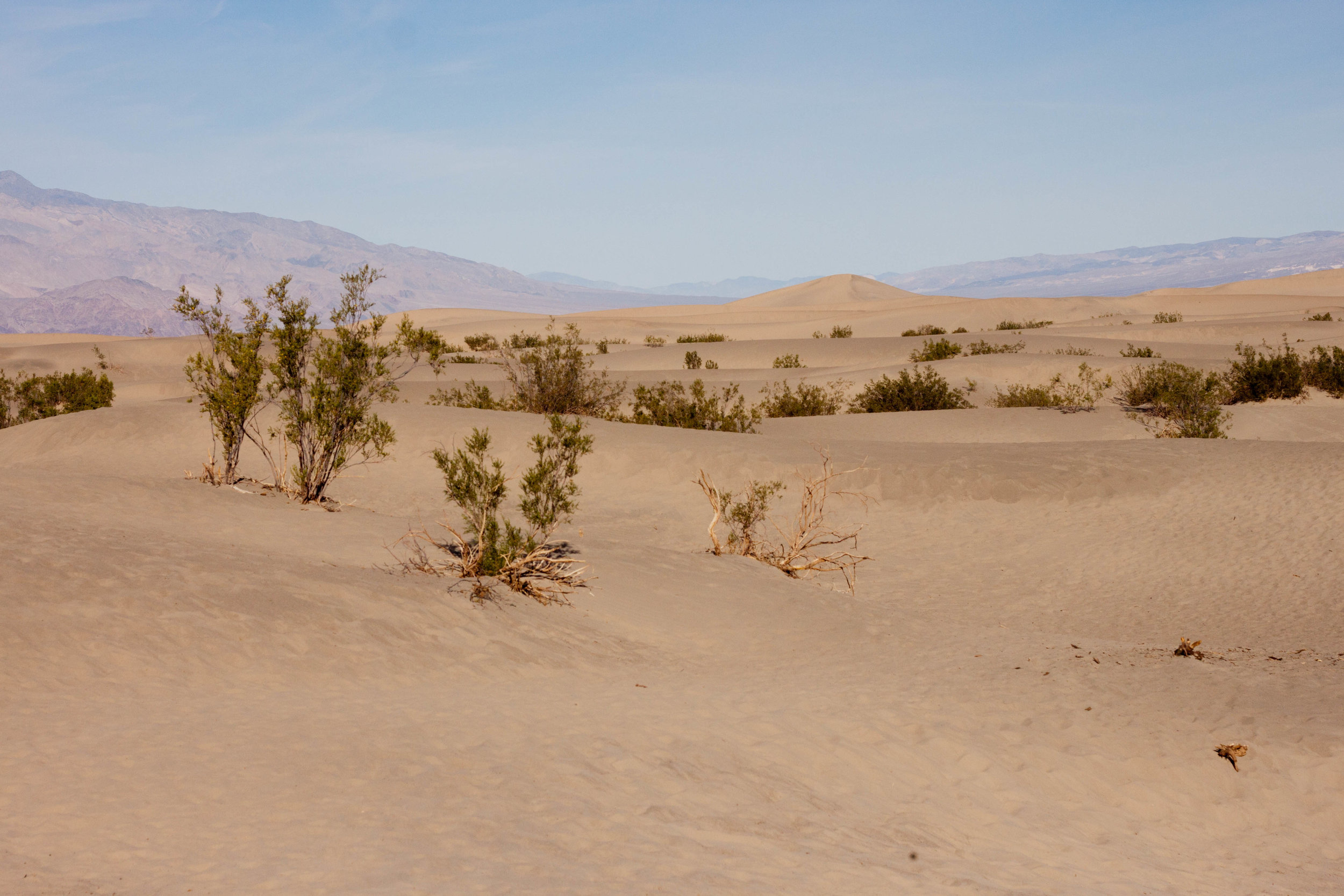 Mesquite Flat Sand Dunes, 2017.