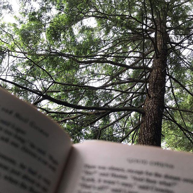 Current view . . . . . . . #adirondacks #adks #hammock #reading #goodomens #bookstagram #treesofinstagram #nature #trees