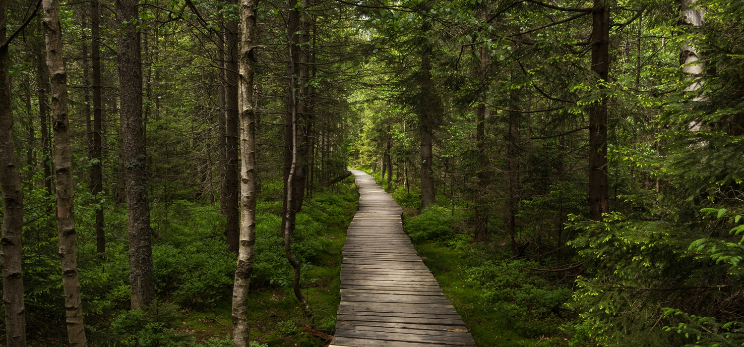 walking-trail-surrounded-by-trees.jpg