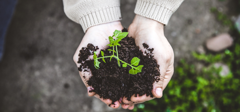 gardener-with-vegetable-seedling-in-spring.jpg