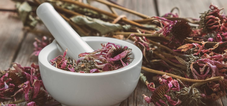 Fresh Echinacea herbs.jpg