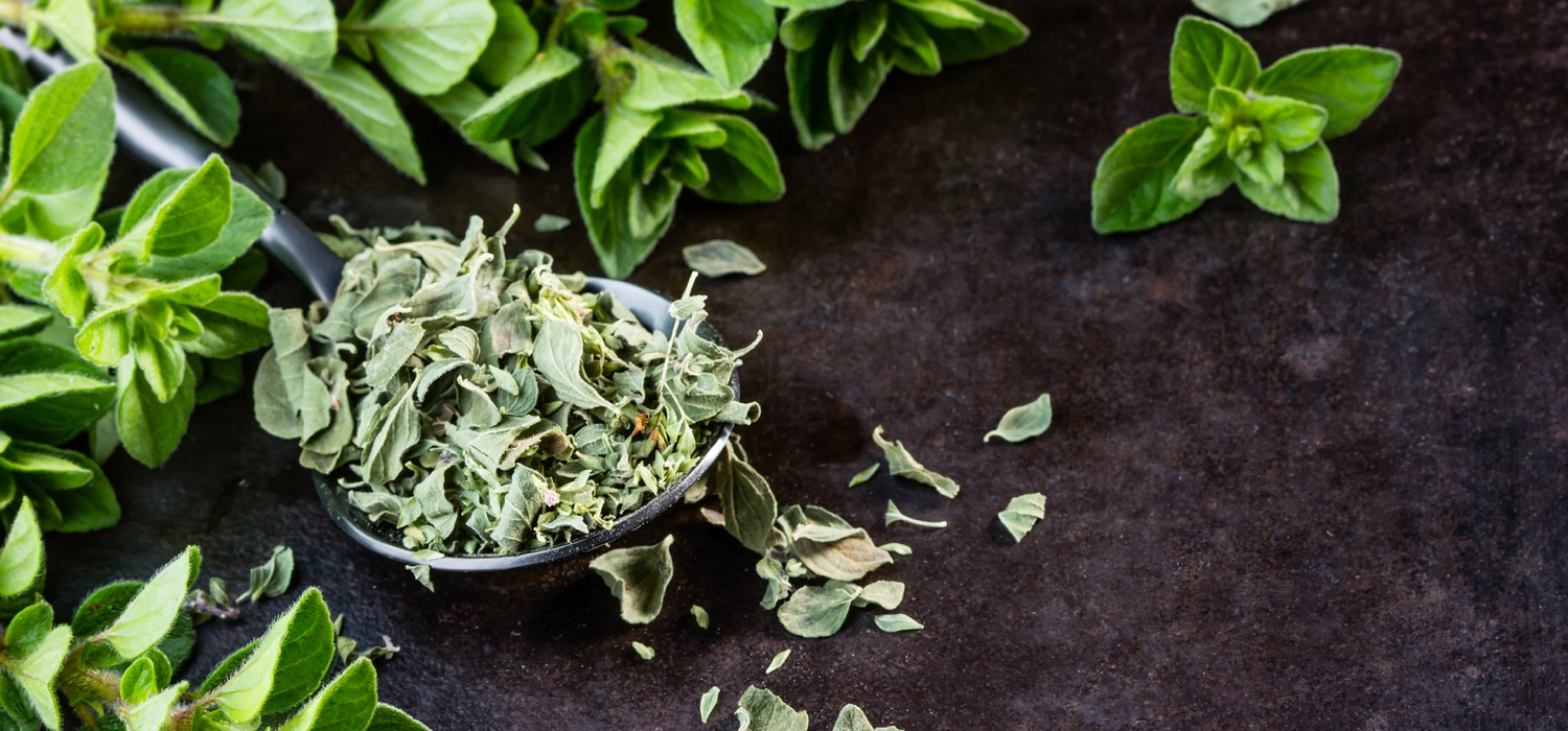 Oregano herb from North American Herb and Spice.jpg
