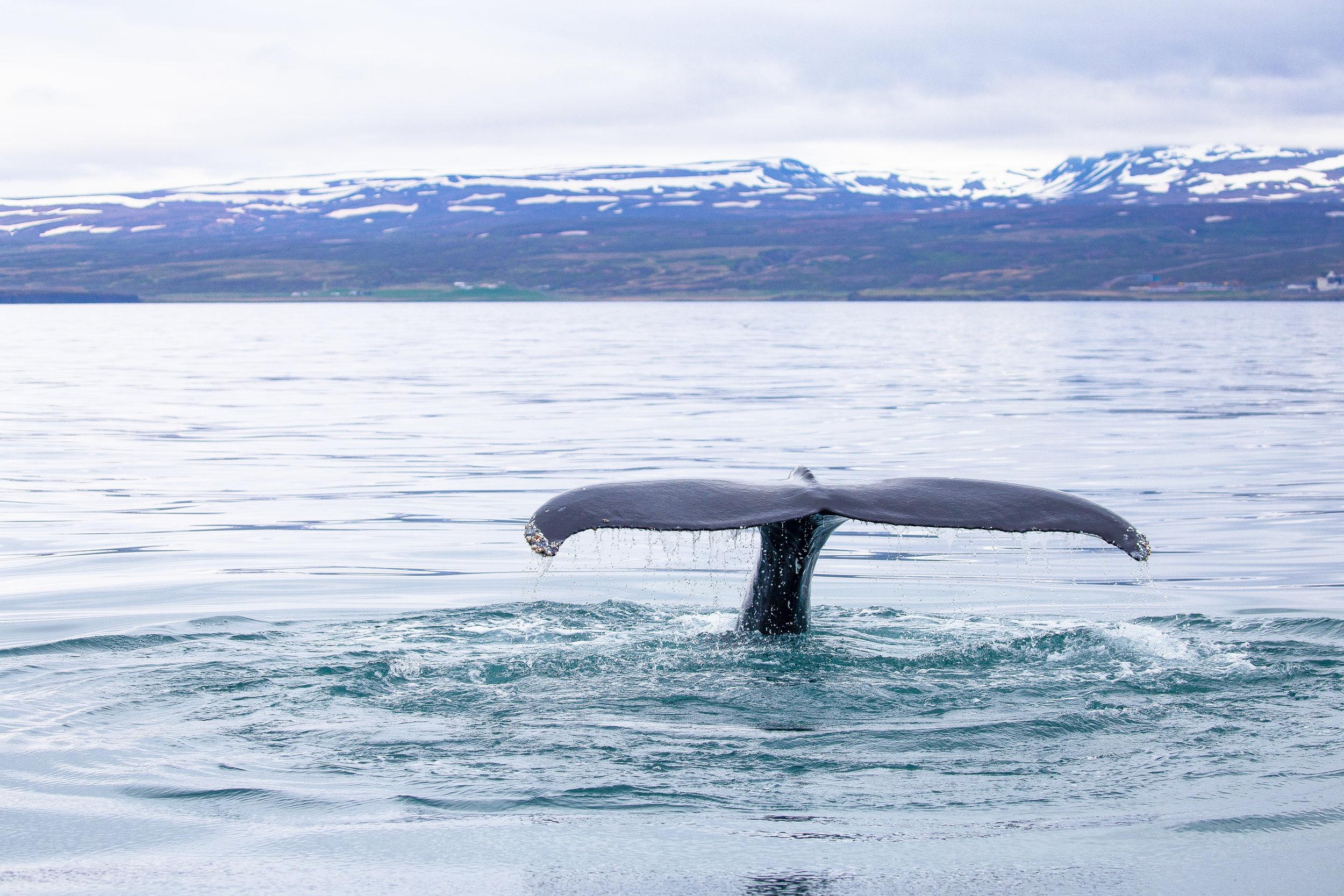 Whale_Tale.jpg