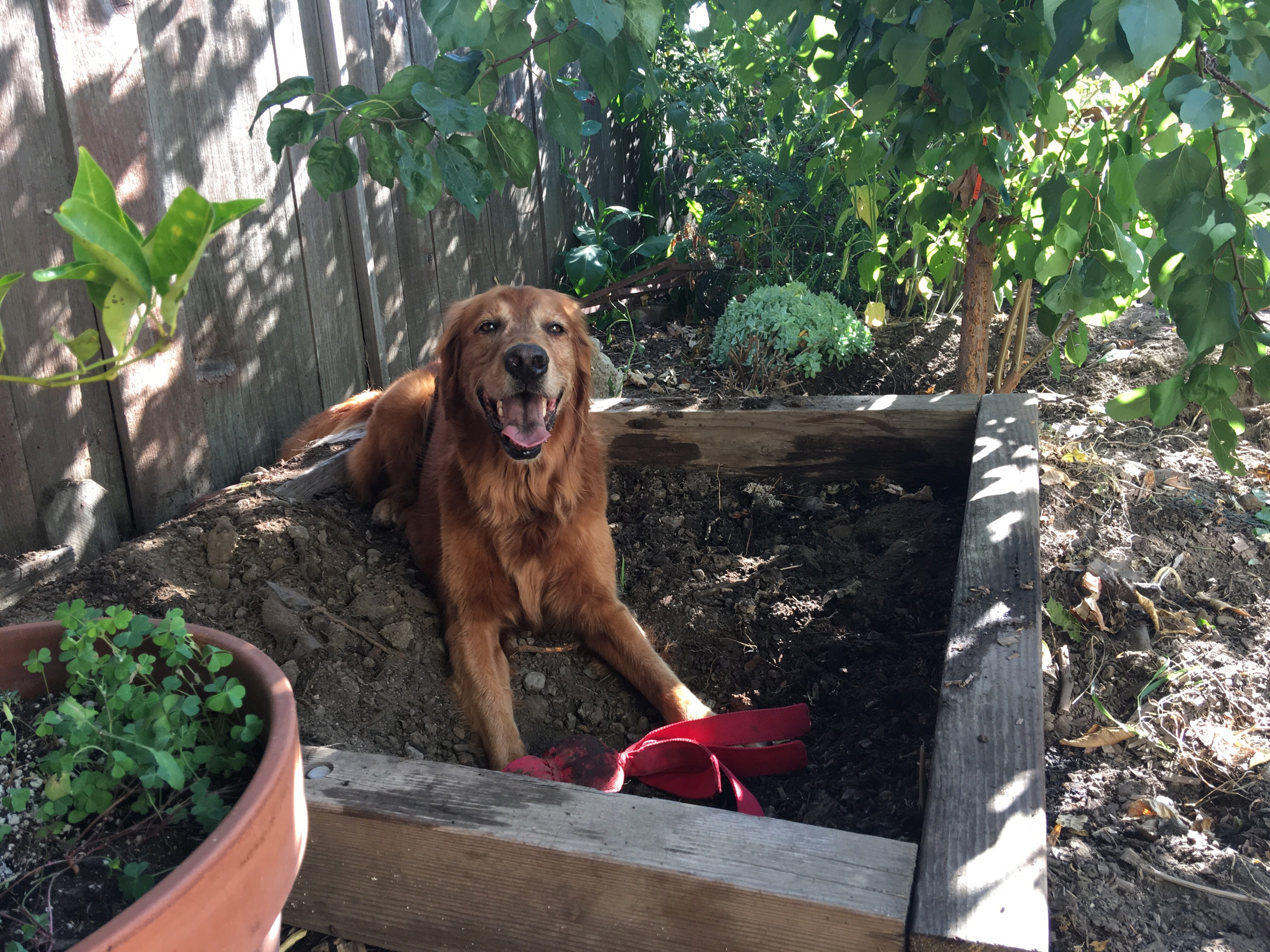 Her new digging box!