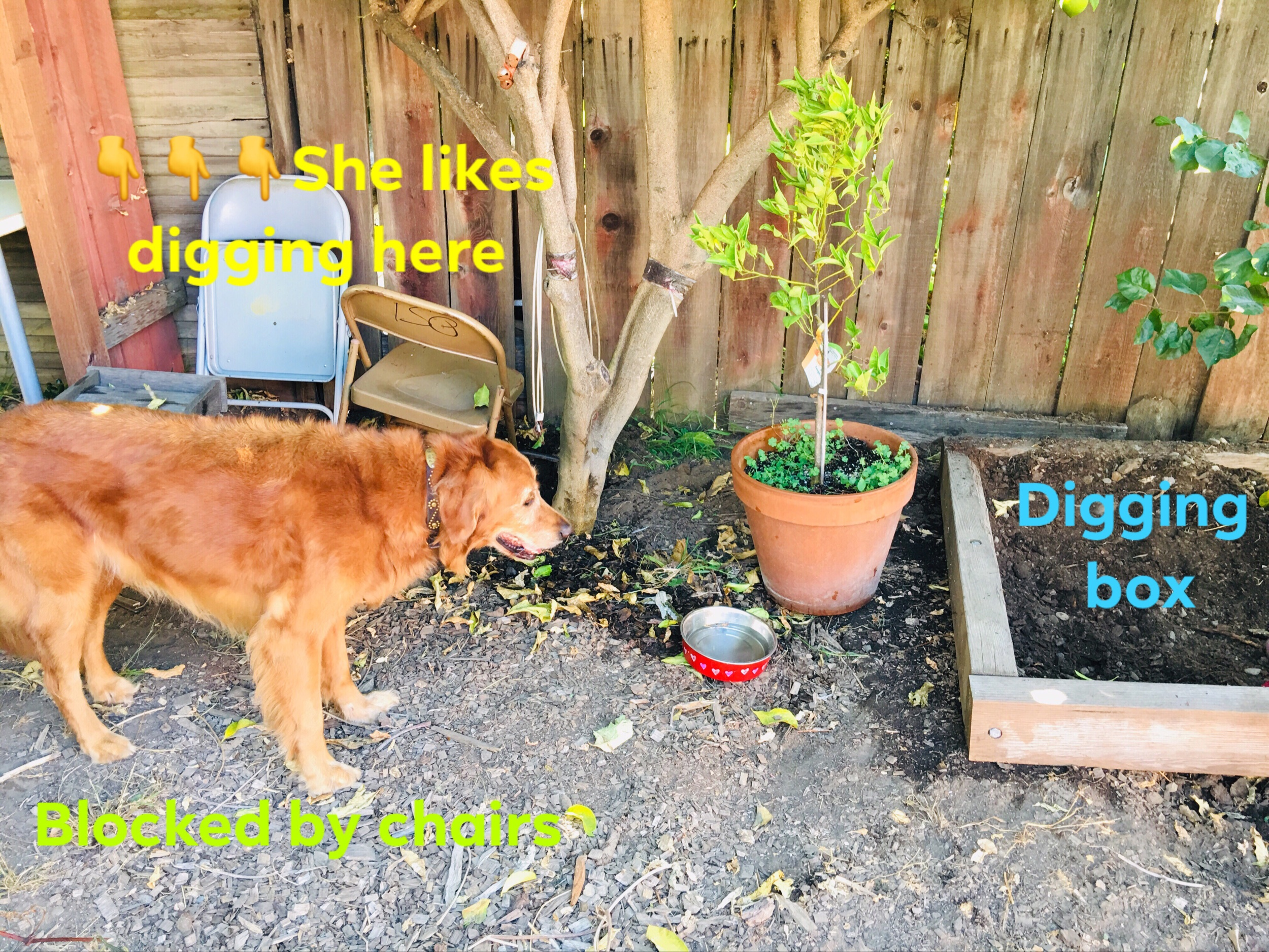 Management while she learns to use her digging box