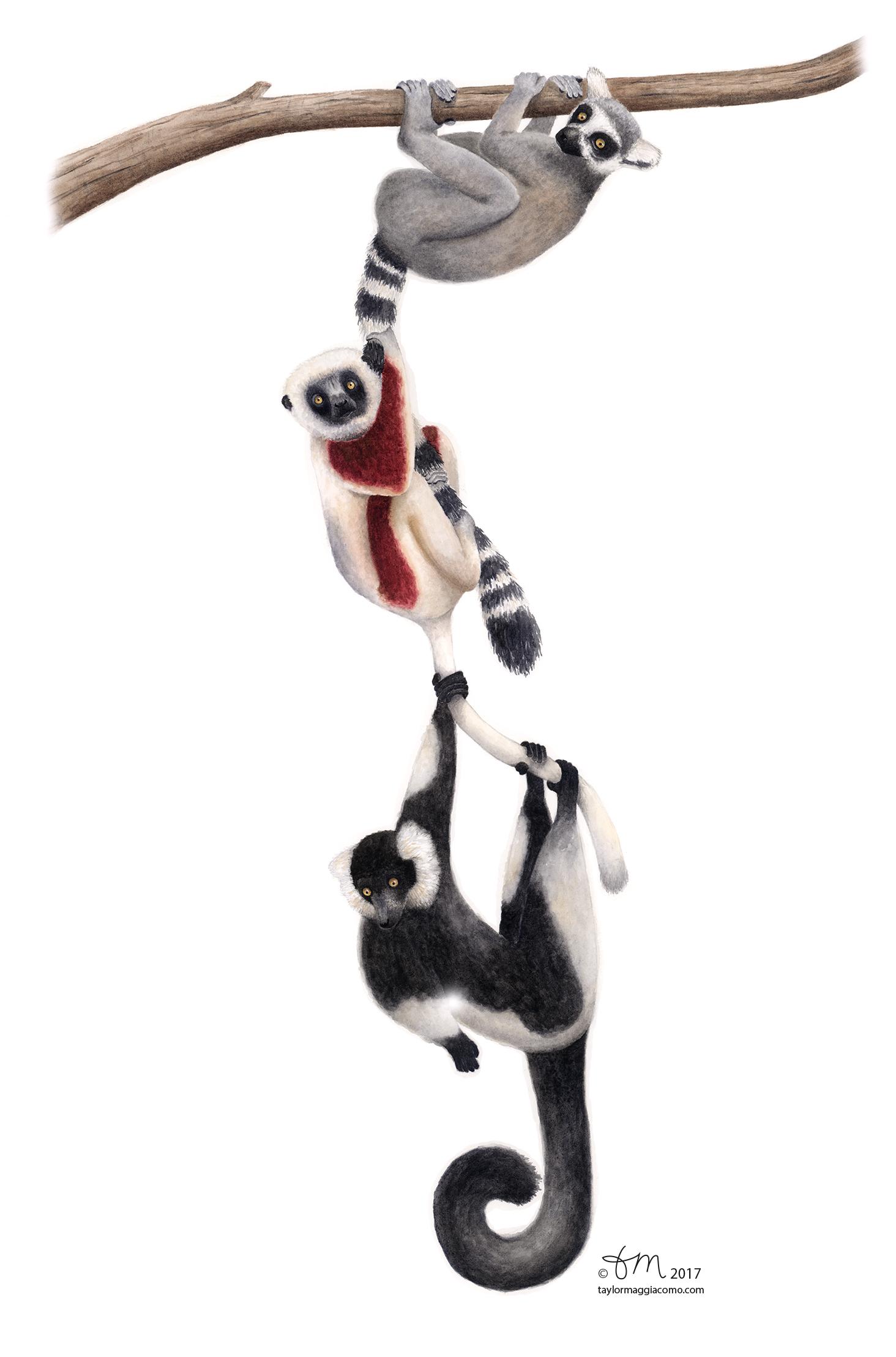 Lemurs-web.jpg