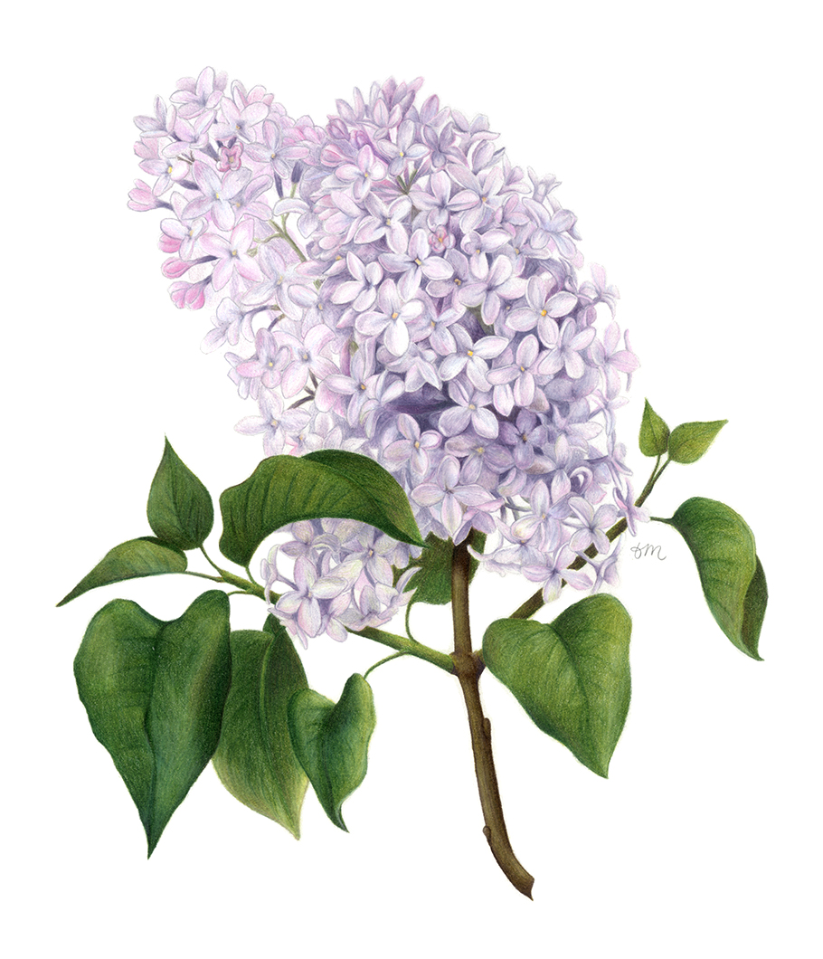 Lilac-fixed-web.jpg
