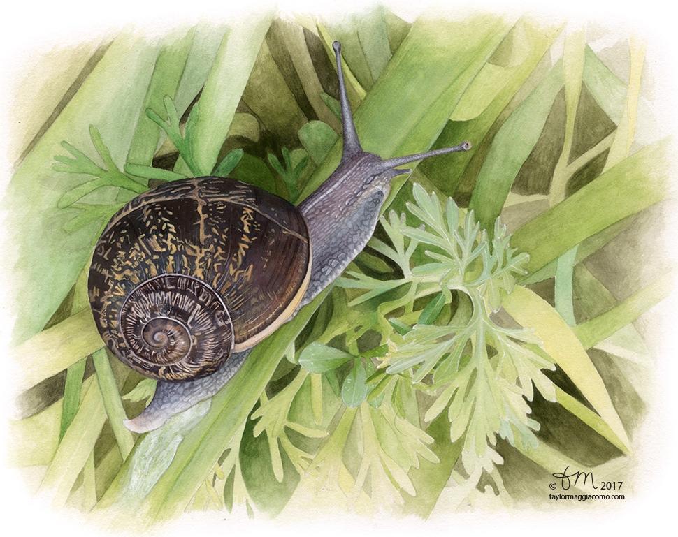 Snail - web.jpg