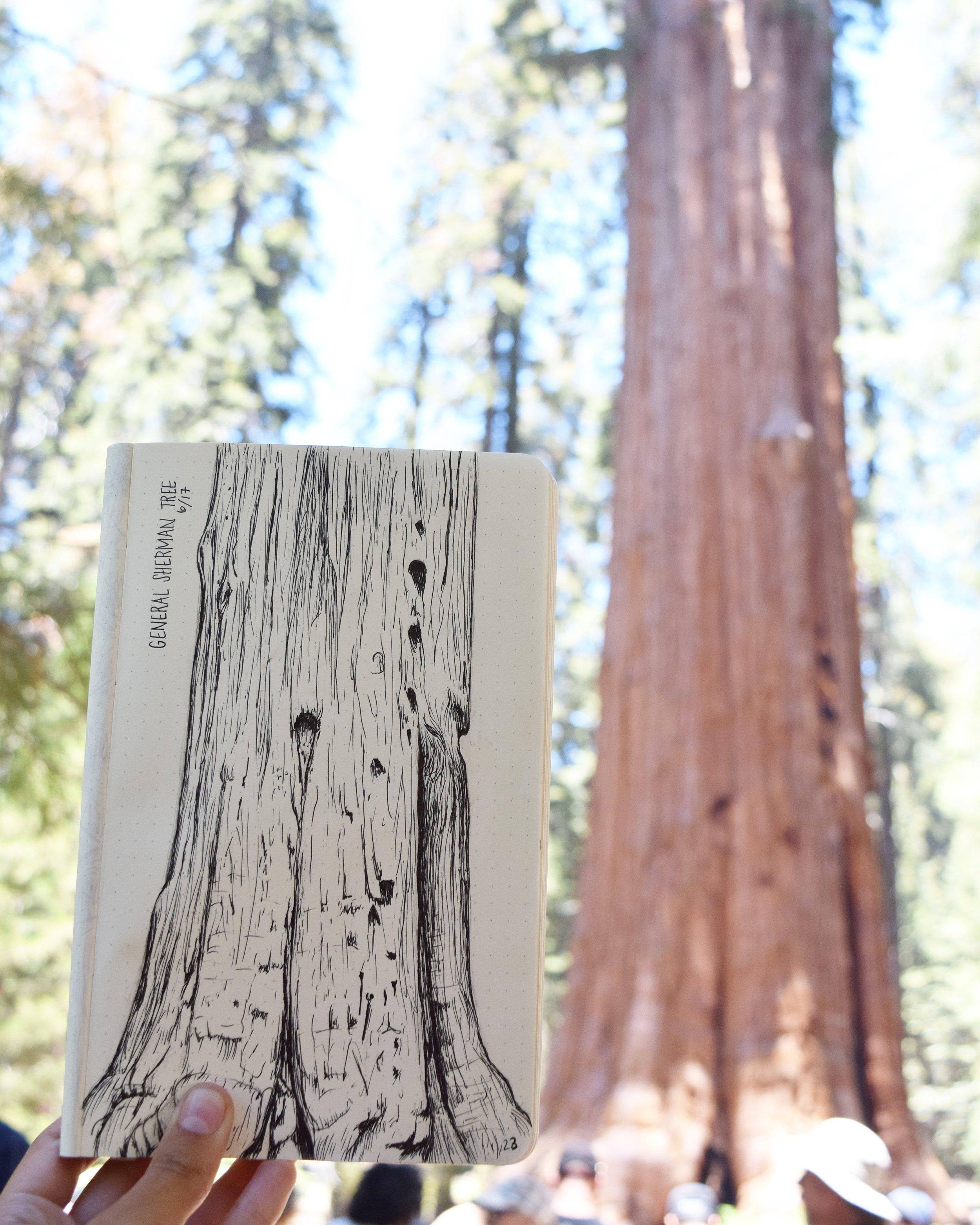 General Sherman Tree - Sequoia NP