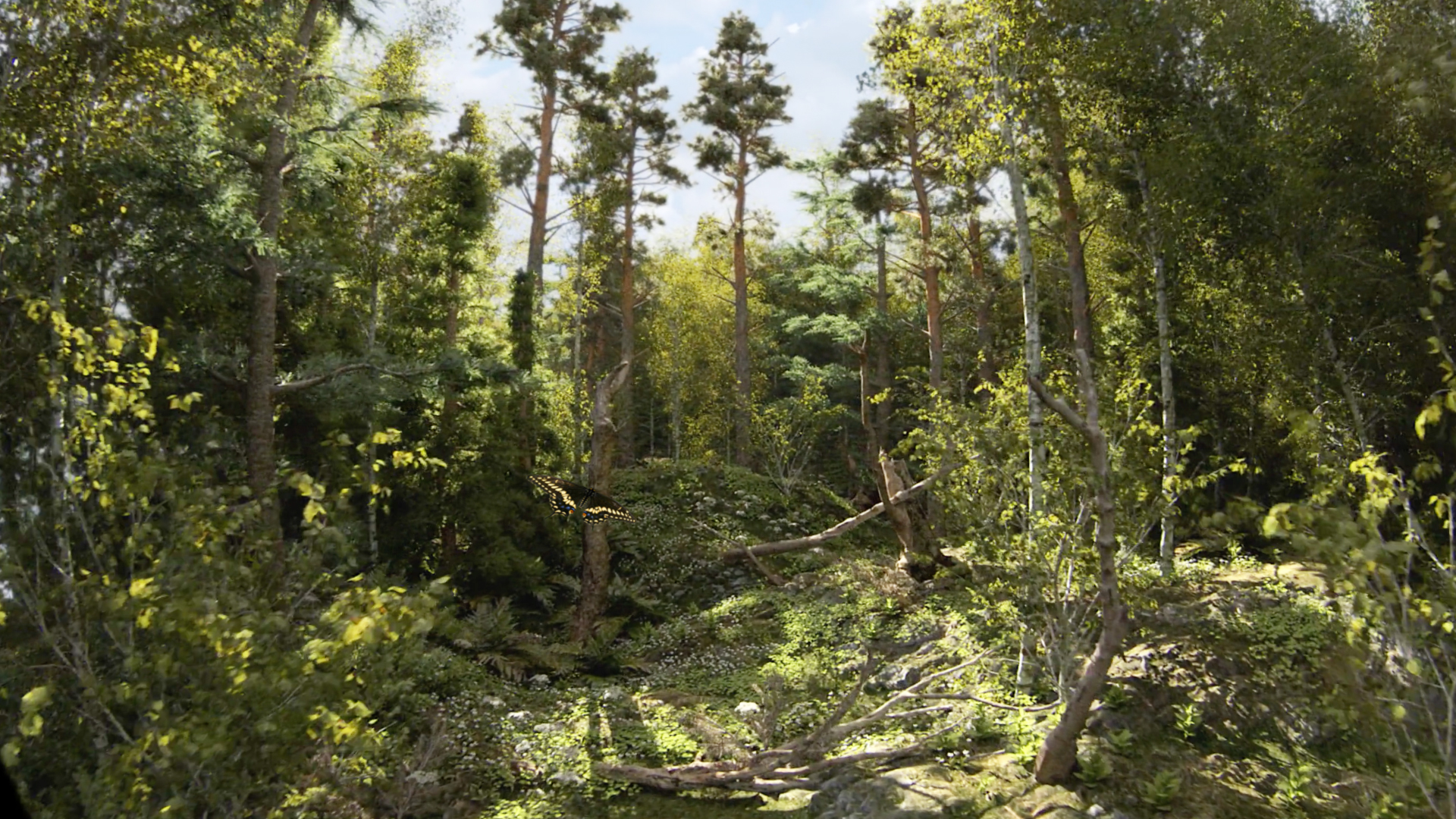 Changbaishan_Publicity_pics_Forest.jpg