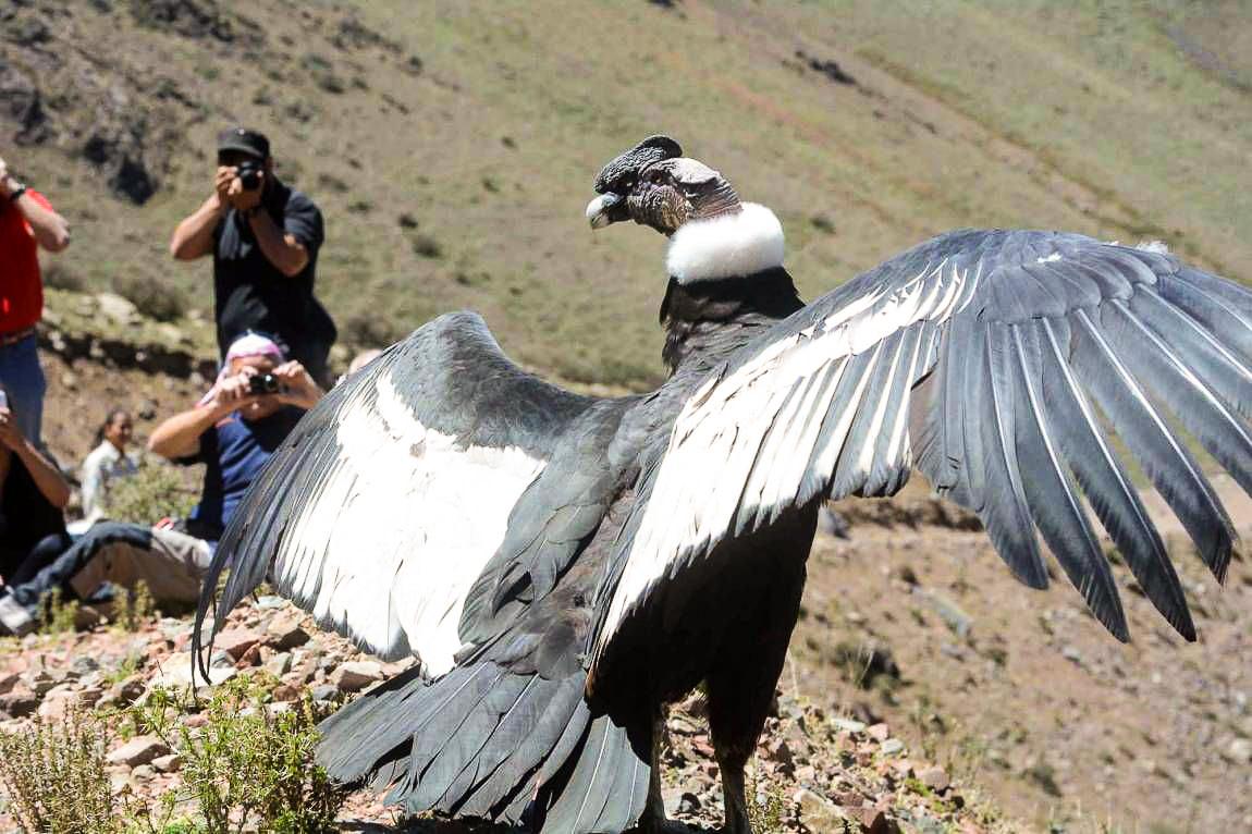 condor (8B)CRUZ DEL CONDOR.jpg
