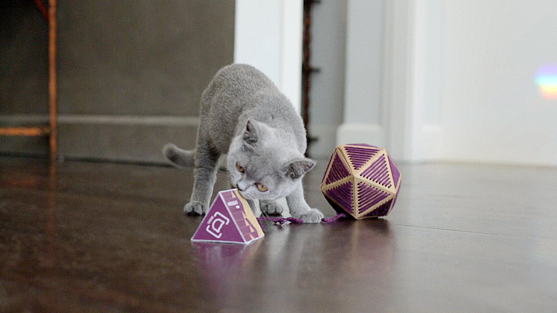 Catstacam_CatToy_0008_Layer 7r2.jpg