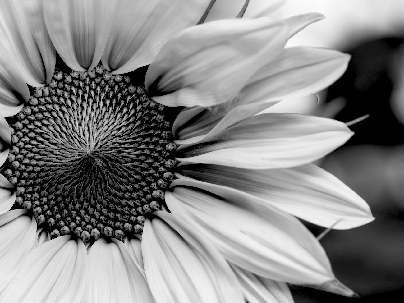 Coaching outdoors - image of a flower and petals