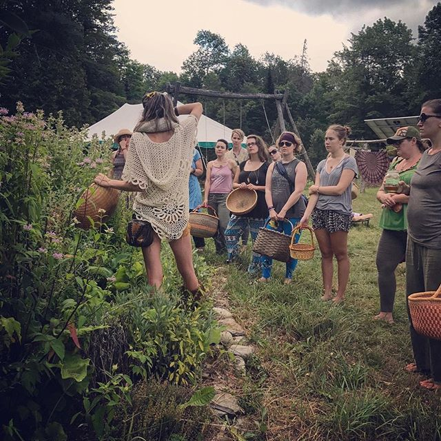 Take a walk on the land and learn about herbs for women's health! We will get to learn how to identify, harvest the herbs, and make tea together. Connecting with the plants. Just one of the many workshops at our Maine retreat this summer!
