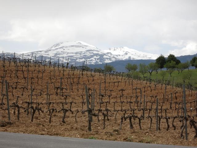Vineyard at Barranco Oscuro