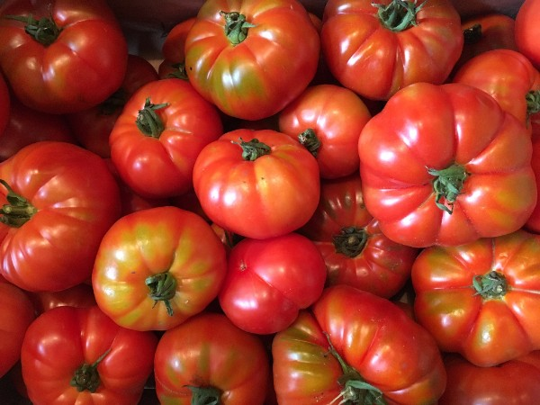 English Tomatoes