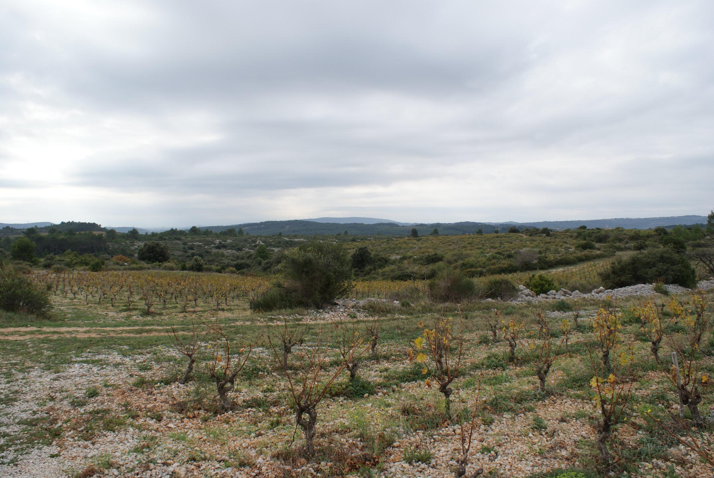 Languedoc39.JPG