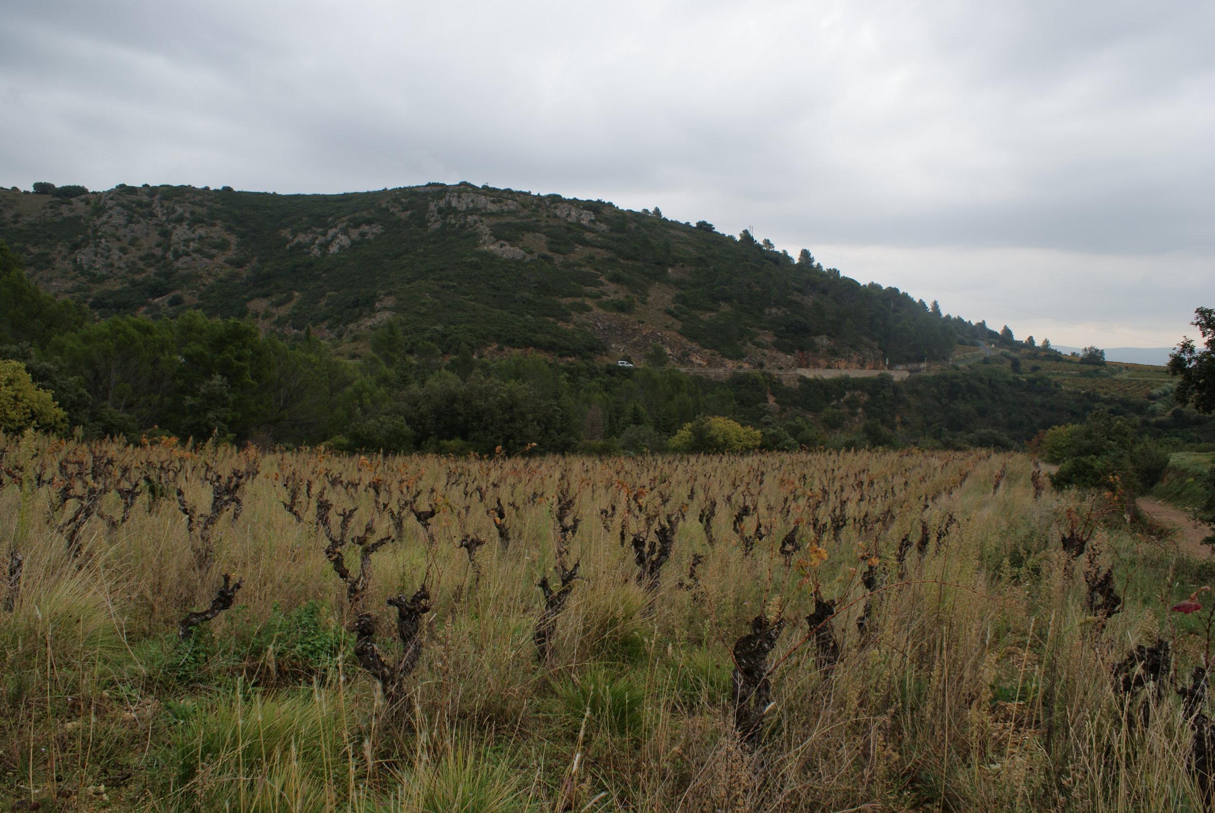 Languedoc83.JPG