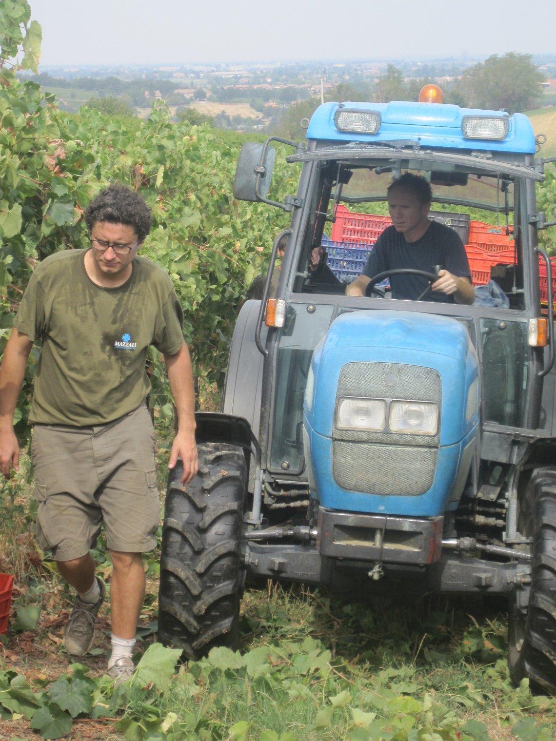 Alberto and Ernesto in the vines.