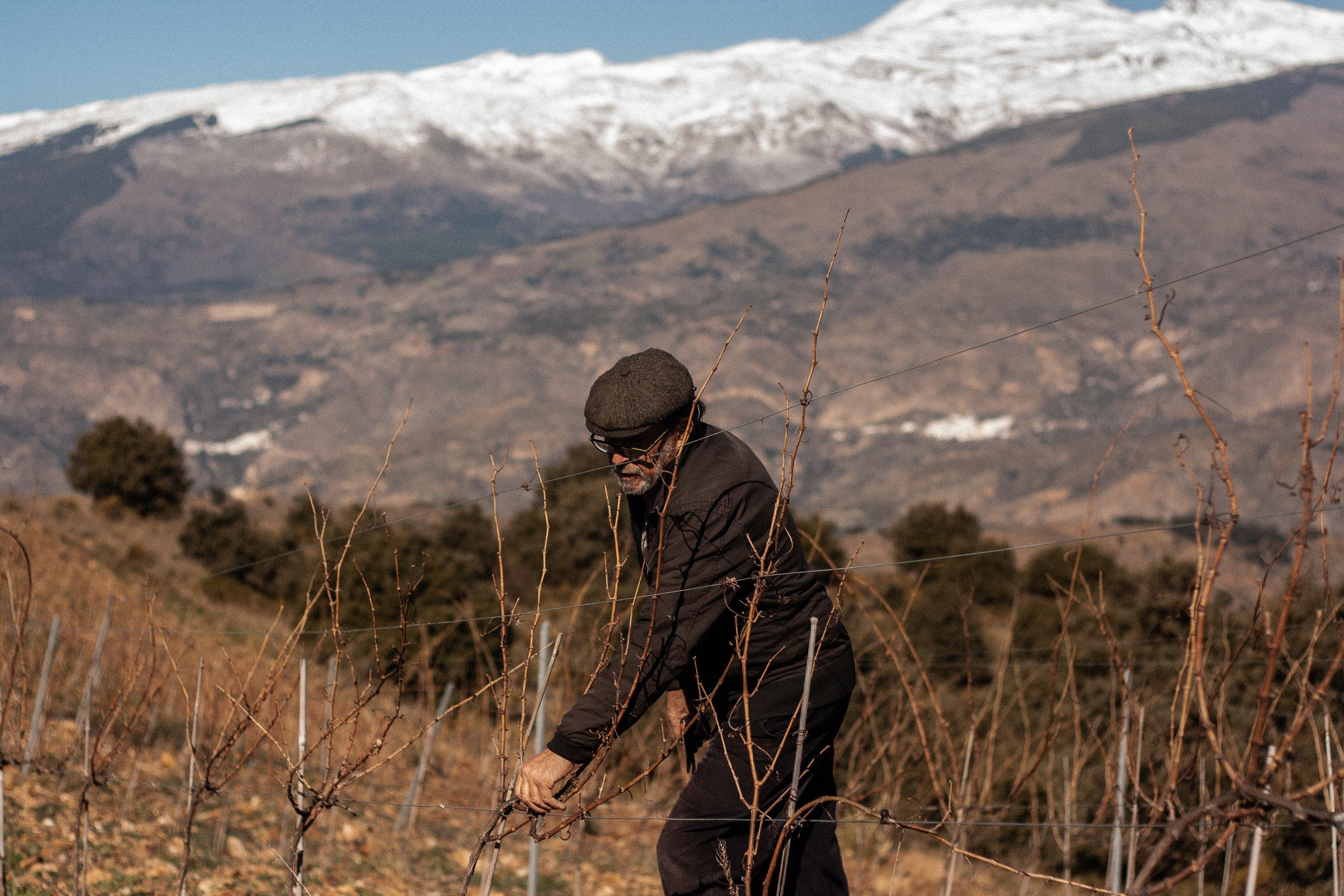 manuel-pruning.jpg