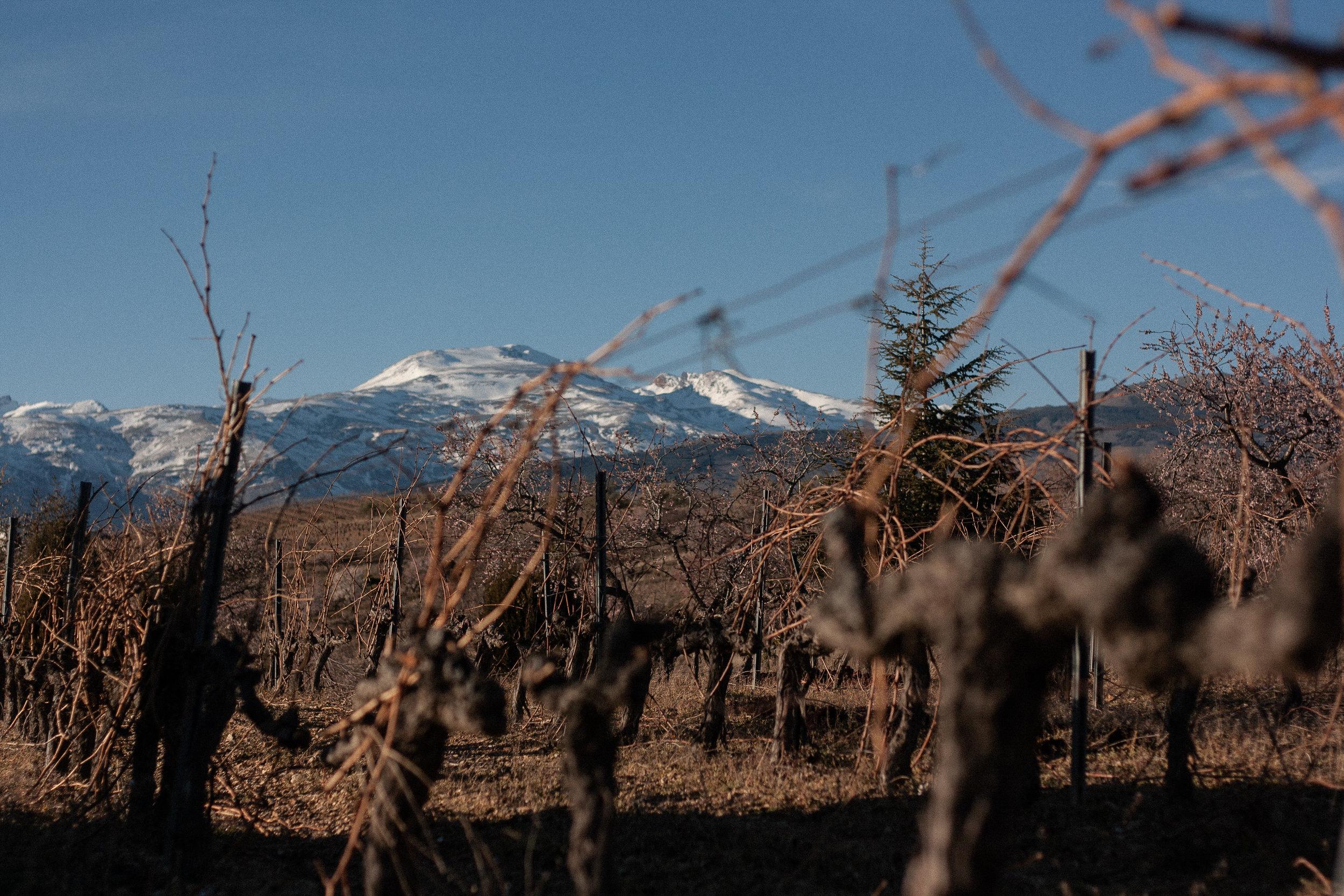 barranco-vines.jpg