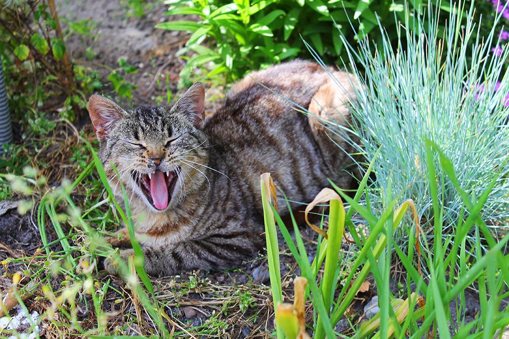 LANDLIG: Familien bor landlig til, på en fin gård i Dzierzgon. Der har de mange fine dyr, blant annet denne søte katten. Foto: Tenk Koffert