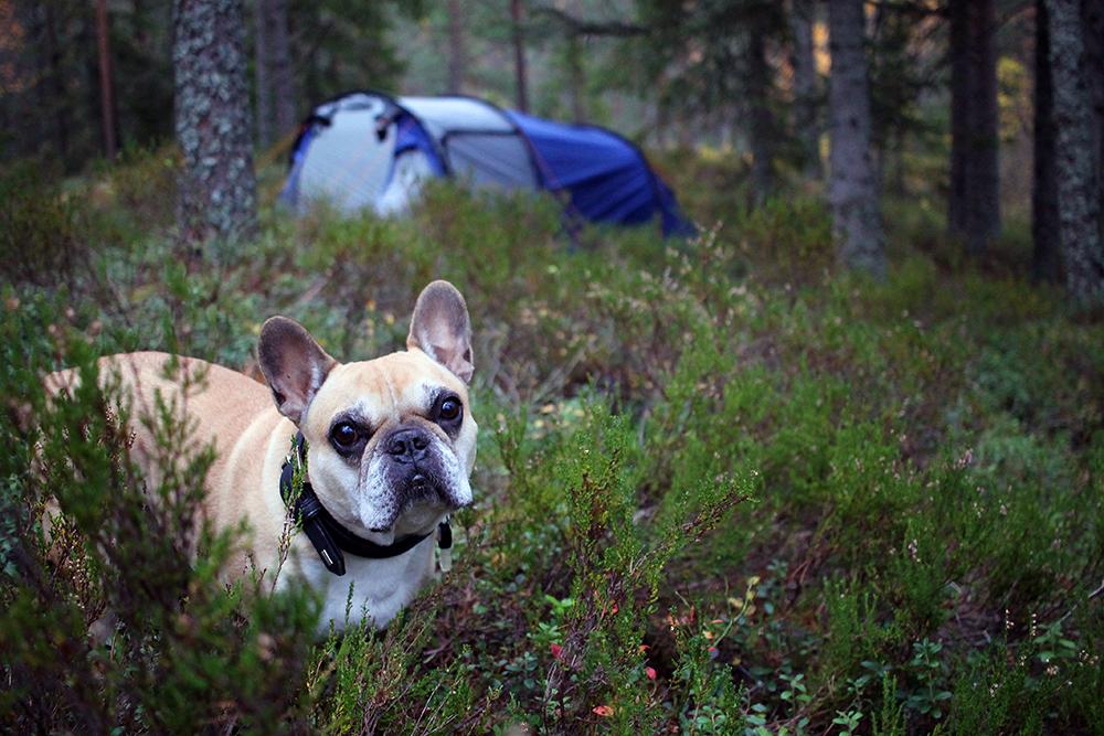 SNOOPY: Husets bulldog ble selvsagt med på turen! Foto: Tenk Koffert