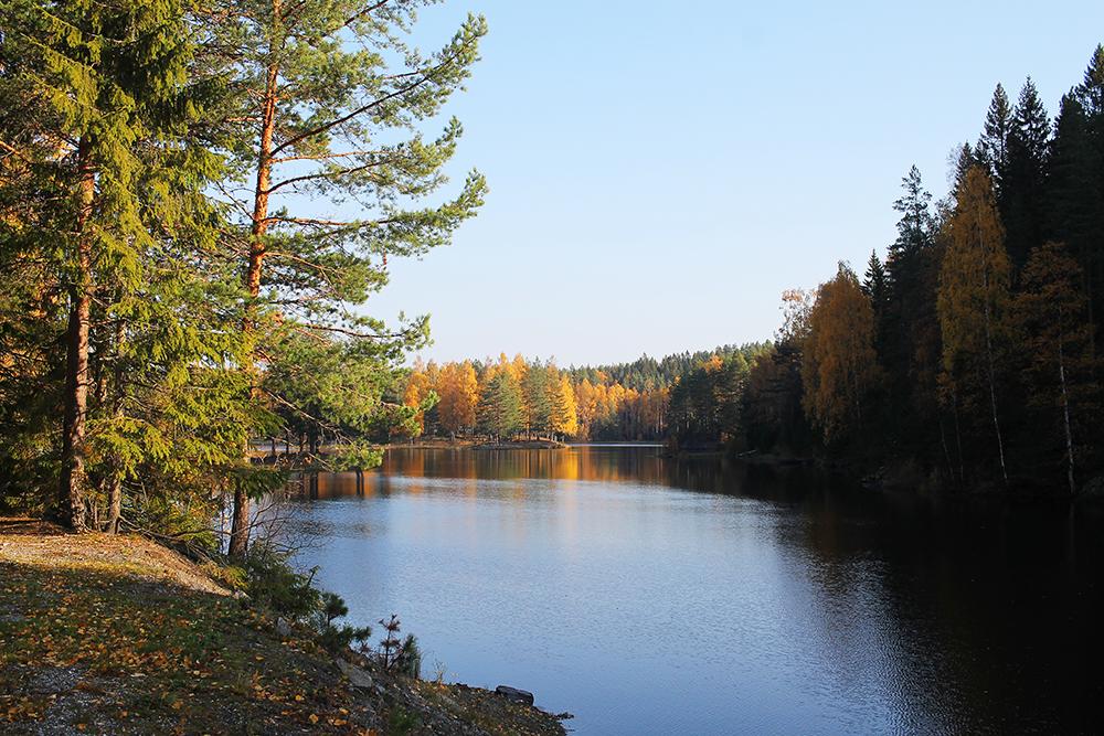 RÆLINGEN: Marka viser seg fra sin beste side på høsten, synes jeg. Foto: Tenk Koffert